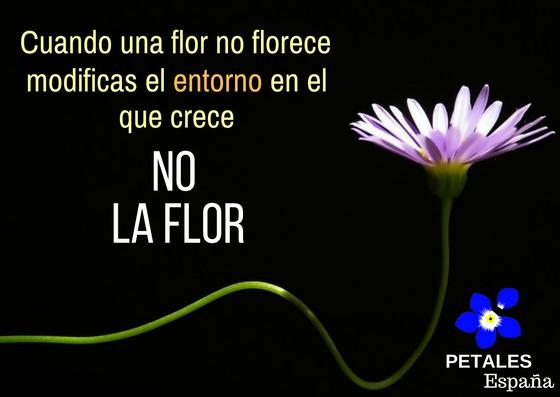 Cuando la flor no florece…